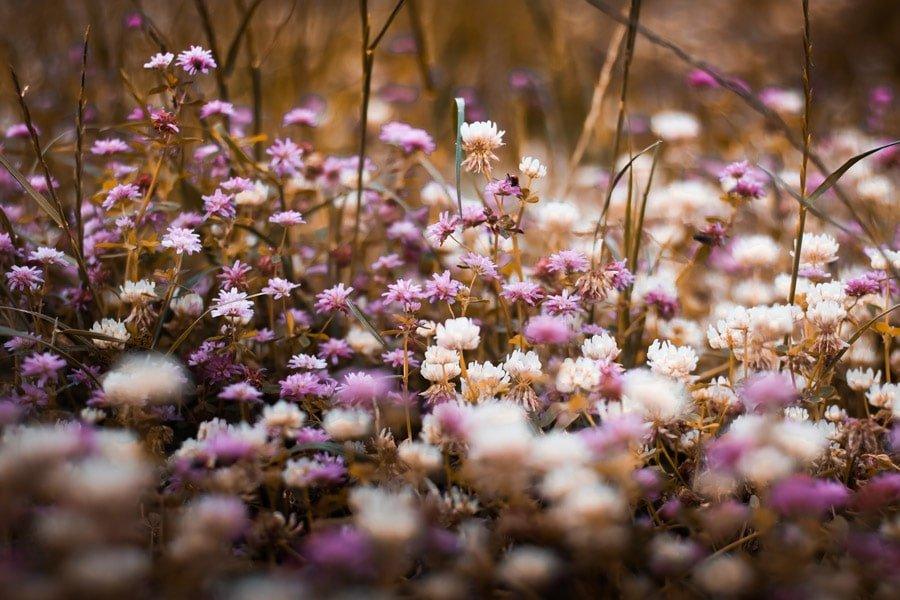 شعر عاشقانه نمی شود که بهار از تو سبزتر باشد از نادر ابراهیمی