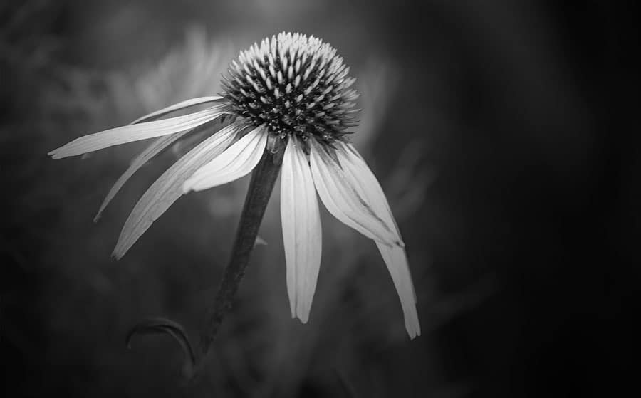 انتخاب سوژه برای عکاسی سفید و سیاه