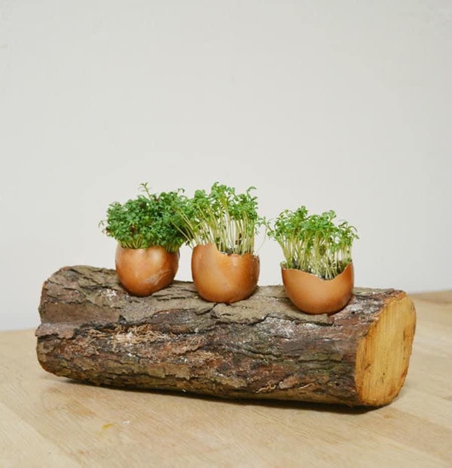 گلدان های دکوری برای کاردستی با پوست تخم مرغ