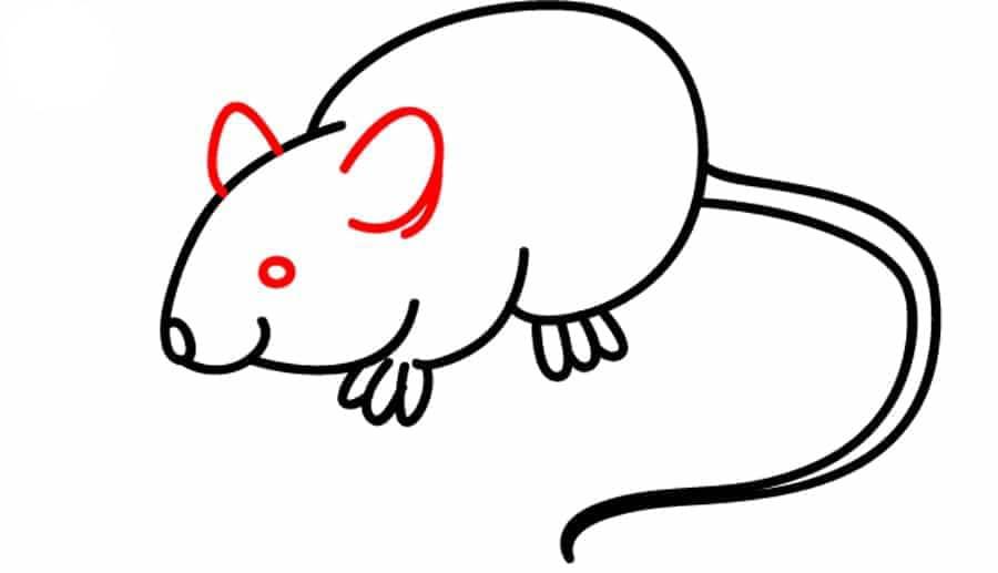 نقاشی موش آموزش تصویری در 6 مرحله آن را بکشید