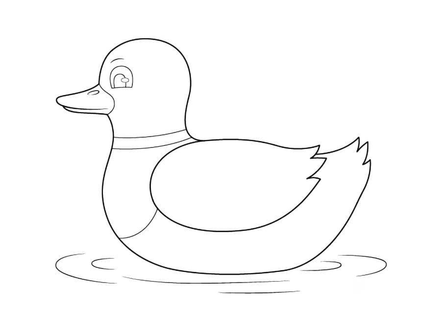 مرحله پنجم نقاشی اردک - تکمیل نقاشی اردک