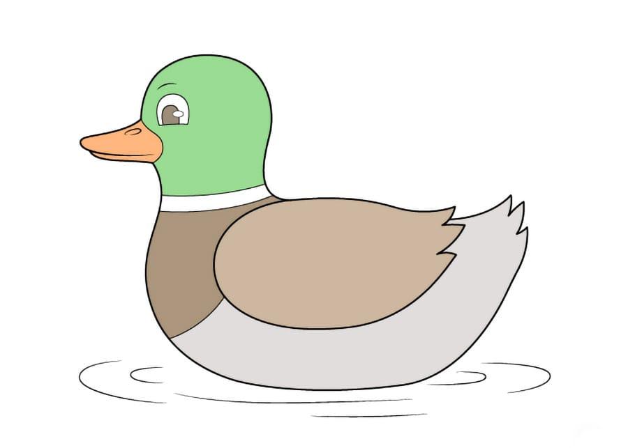 مرحله آخر نقاشی اردک - رنگآمیزی نقاشی اردک