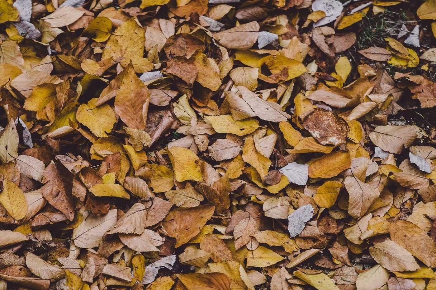 شعر پادشاه فصل ها پاییز
