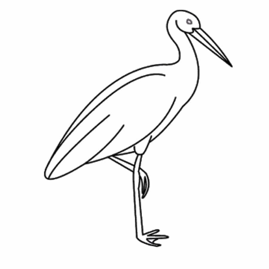 تصویر پرندگان